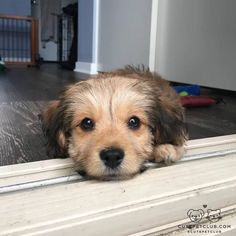 """cutepetclub: """"From @cockapoopinwithgunther: """"Can't wait for you to come home."""" #cutepetclub [source: http://ift.tt/2ibf7Vg ] """""""