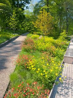 In every landscape archetype, there are filler plants -- the overachievers in…