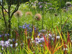 Mein neuer Garten - Petra Pelz Landschaftsarchitektur