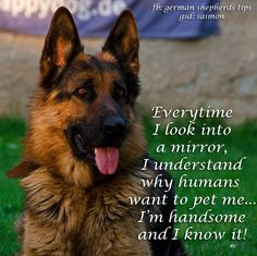 Image result for war dogs meme