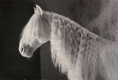 "Sandra Lee Kaplan Lucitano Stallion 1/5 Photograph on Handmade Paper 18"" x 27"""