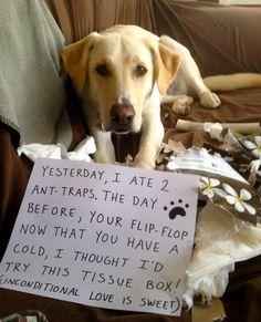 Dog Keeps Eating Tissue
