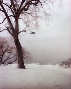 New Acquisition:  Untitled #10192 by Todd Hido