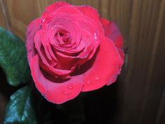 A rose..for a beautiful heart.