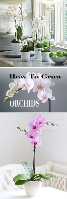 How to Grow Orchids | Boo Gardening