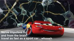 Can nerve impulses beat a sports car? Our DYK series is not a quiz, or a test, it is just a fun fact of the day spruced up with high quality graphics. http://www.scientificanimations.com/did_you_know/can-nerve-impulses-beat-sports-car/ #ScientificAnimations #DidYouKnow #ThursdayDidYouKnow #Nerve
