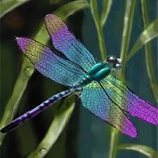 colorful dragonfly - Google Search