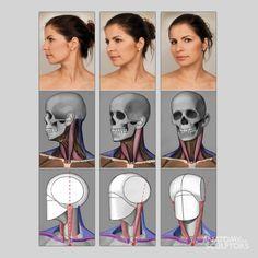 Анатомия и пропорции