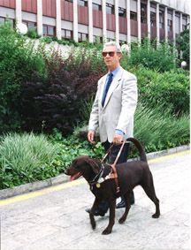 """Perros guía Texto y fotos: Antonio García López (www.defarrajon.com) Educador Canino y Adiestrador de perros potencialmente peligrosos  Este mes vamos a conocer unos perros que tienen como función """"sustituir"""" uno de los cinco sentidos de los que disponemos los humanos, la vista. Éstos son los denominados perros guía, que desarrollan uno de los trabajos más delicados. Para ver más de este artículo puedes descargarte la revista en: http://revistas.elmundodelperro.net"""