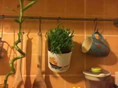 We looove this! Second best use of our wok box! Go green!  #wokonby www.wokonby.ro