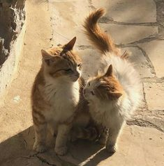 animal animals pet pets funny cute aesthetic cat cats kitten kittens in love Pretty Cats, Cute Cats, Beautiful Cats, Adorable Kittens, Baby Animals, Cute Animals, Photo Chat, Cat Aesthetic, Brown Aesthetic