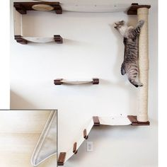 CatastrophiCreations Cat Mod Climb Track - Multiple-level Cat Hammock and Climbing Activity Center - Handcrafted Wall-mounted Cat Tree Shelves -- For more information, visit image link. (This is an affiliate link and I receive a commission for the sales) Furniture Scratches, Cat Furniture, Furniture Buyers, Furniture Companies, Painted Furniture, Tree Shelf, Cat Activity, Cat Perch, Cat Hammock
