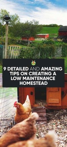 9 detailed and amazing tips on creating a low maintenance homestead