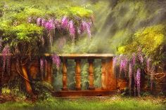 Flower - Wisteria - A Lovers View - Photography by Mike Savad