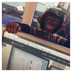 "Every now and then you'll find something at Prodo Digital and just think to yourself, ""what?"". #prododigital #agencylife #officechimpanzee"