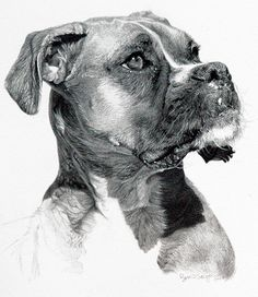 Secrets Of Drawing Most Realistic Pencil Portraits - - . Secrets Of Drawing Realistic Pencil Portraits - Discover The Secrets Of Drawing Realistic Pencil Portraits Realistic Animal Drawings, Realistic Sketch, Hyper Realistic Paintings, Pencil Portrait Drawing, Pencil Drawings, Dog Drawings, Pencil Art, Animal Sketches, Drawing Sketches