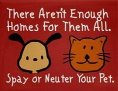 spay and neuter! no exceptions!