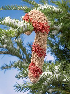 Bird Seed Candy Canes, Bird Seed Ornaments | Gardener's Supply