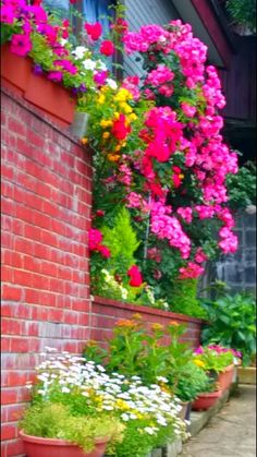 Colorful flowers in front of a house at Honda-machi, Kanazawa, Japan