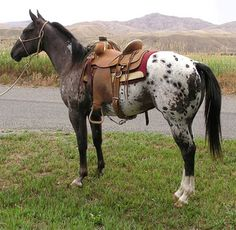 We have more horses for sale than any other equine market place in the US. Cute Horses, Horses For Sale, Horse Love, Barrel Racing Horses, Barrel Horse, Most Beautiful Animals, Beautiful Horses, Western Horsemanship, Horse Therapy
