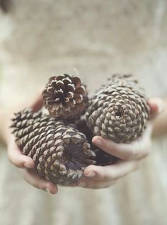 Pinecone collection. ~ETS