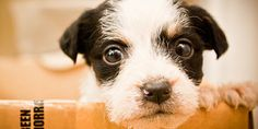 Please sign: Saving Innocent Dogs From Kill Shelters > http://www.thepetitionsite.com/930/798/370/saving-innocent-dogs-from-kill-shelters/