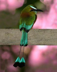 El torogoz es una de las aves más hermosas que mis ojos han visto... por algo es el Ave Nacional de El Salvador.