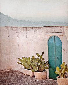 Cactus and blue door, lovely. Cactus, Modern Interior Design, Interior And Exterior, Exterior Rendering, Exterior Shutters, Deco Pastel, Pastel Pink, House Design Photos, Cacti And Succulents