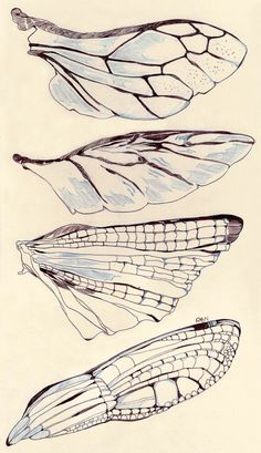 Insect Wings, Insect Art, Dragonfly Wings, Butterfly Wings, Drawing Sketches, Art Drawings, Indie Drawings, Psychedelic Drawings, Poster Drawing