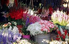 madagascar flowers in market - Google Search