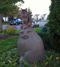 Cat as hat. www.zazzle.com/kittyprettygifts