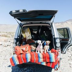 When roaming the versatile layout of the desert, it's important to make room for more than the average load. We doubtlessly accommodate the precious cargo that is our co-pilots, as they peer out and unleash their imaginations.  #WildflowerWanderlust #DeathValley #SuperBloom #LR4 #LRSuperBloom #Desert #DeathValleyNationalPark #Wanderlust #Dogs #DogsofInstagram  Photo Credit: @carleyscamera