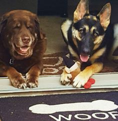 Schoko is old and blind Scout is young and playful. They keep each other company:)
