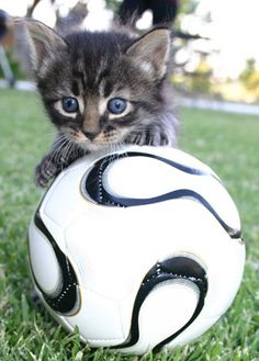 Cat Playing Ball - 33 Pictures