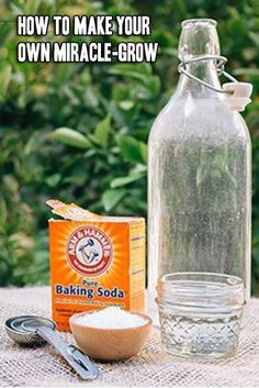Gardening Tips How To Make Your Own Miracle-Gro 1 gallon of water 1 tbsp epsom salt 1 tsp baking soda tsp of Household ammonia. Mix all ingredients together and use once a month on your plants. Growing Plants, Growing Vegetables, Growing Herbs Indoors, Growing Carrots, Organic Gardening, Gardening Tips, Kitchen Gardening, Gardening Gloves, Pot Jardin
