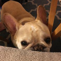 dog イヌ 犬可愛い画像まとめ http://ift.tt/1RflSym
