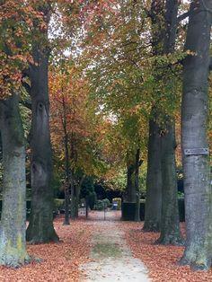 Helmond protestantse begraafplaats Molenstraat 2015-12  Foto: Mario Kuijpers