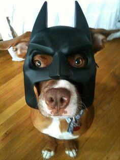 The Bark Knight -- bahahaha