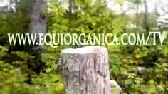 GARUVA, SC, 11 DE FEVEREIRO - Igreja Orgânica Piçarras, Barra Velha, Joi...
