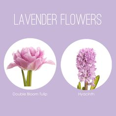 It's been a while since we put together a flower color board and I figured it was about time we shared our favorite lavender flowers! There are so many different lavender flowers and they come in a...