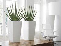 Interieurbeplanting | Kantoor | Planten | Hydrocultuur | Luxe | Onderhoud | Kunstplanten | Potten | Binnenhuisarchitectuur | Inrichting | Bedrijven | Groen | Stijl | Design | Woning | Inspiratie