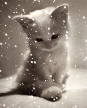 Download Animated 176x220 «Симпапусик» Cell Phone Wallpaper. Category: Pets & Animals
