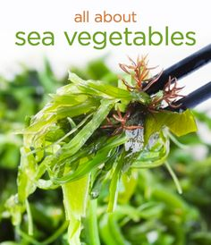 Why you should be eating more sea vegetables