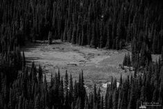 A black and white landscape photograph of a mountain meadow along Sunrise Creek in Mount Rainier National Park, Washington. The post Sunrise Creek Meadow, Washington, 2019 appeared first on . Mount Rainier National Park, Black And White Landscape, Landscape Photographers, Washington State, Sunrise, National Parks, Mountains, Nikon, Prints