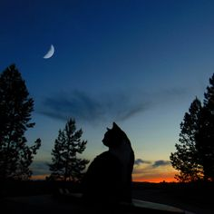 Warrior Cats - Silhouette Comforters by Dawn Balidashi - Queen: x Pretty Cats, Beautiful Cats, Animals Beautiful, Cute Baby Cats, Kittens Cutest, Animals And Pets, Cute Animals, Cat Couple, Cat Aesthetic