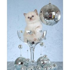 """""""Wishing you champagne kittens and disco balls in #2016 (via LaughterKey) Check out this week's Sunday funnies on papermag.com - link in our bio!"""" Photo taken by @papermagazine on Instagram"""