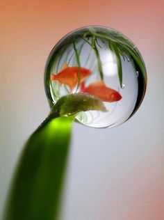 water-droplet-and-fish