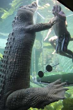 Swimming With Crocodiles-SCARY!!!