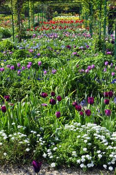 Monet's gardens, planted by color, are gorgeous in April!
