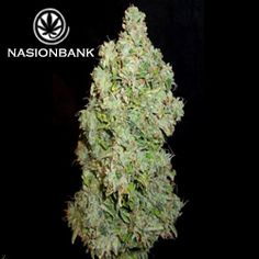 Buy top quality medical marijuana, cannabis, edibles, cannabis oil (THC/CBD) oil, Rick Simpson oil, wax, Hemp oil with no side effects from our Discreet and Reliable Dispensary.  Contact; +1 (908)485-7293 or visit our website at www.legalcannabisshop.com